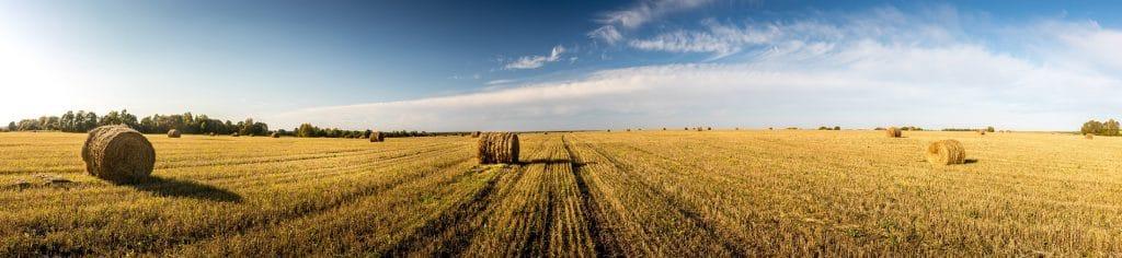Harvest-field